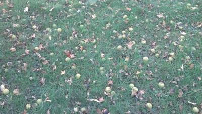 2013 Walnuts (Ground)
