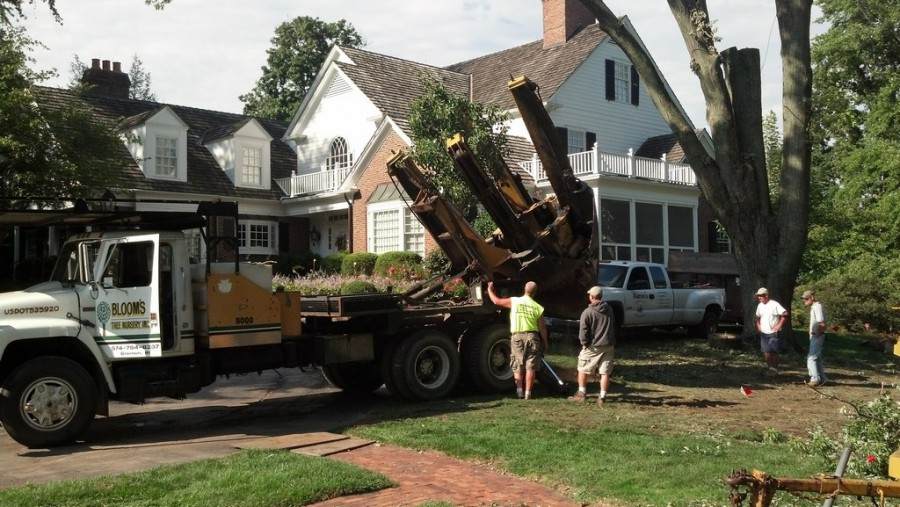 Moving and Removing Existing Trees